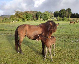 Passeios Equestres – Casa de Requeixo