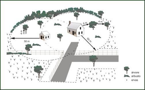 Informação sobre distanciamento entre árvores no âmbito da limpeza de terrenos