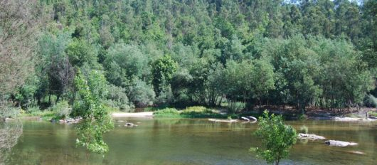 """Praia Fluvial de Verim renova """"Qualidade de Ouro"""" da água"""