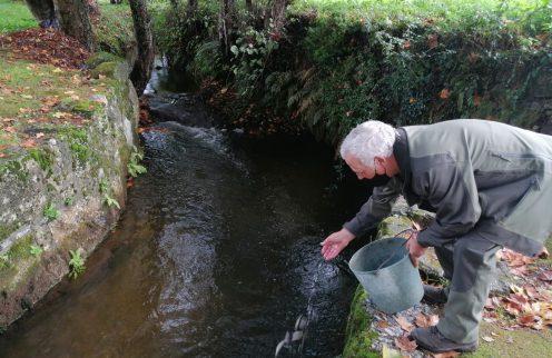 Póvoa de Lanhoso repovoa linhas de água com trutas